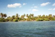 yucatan palms-1.jpg